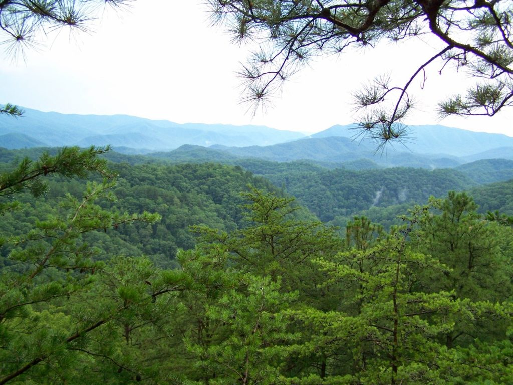 Pine boughs all around 1024x768 - NEXT TO HEAVEN ZIPLINES - THE MOST SCENIC ZIPLINE IN THE SMOKIES!