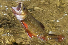 Fishing in the Smokies - Coupons - Pigeon Forge & Gatlinburg